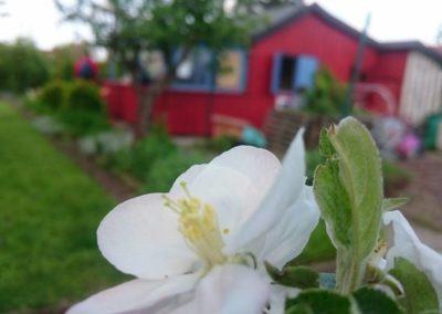 2017-05-13 Frühling im Vereinsgarten 04
