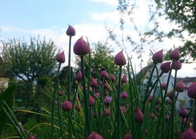 2017-05-13 Frühling im Vereinsgarten 03